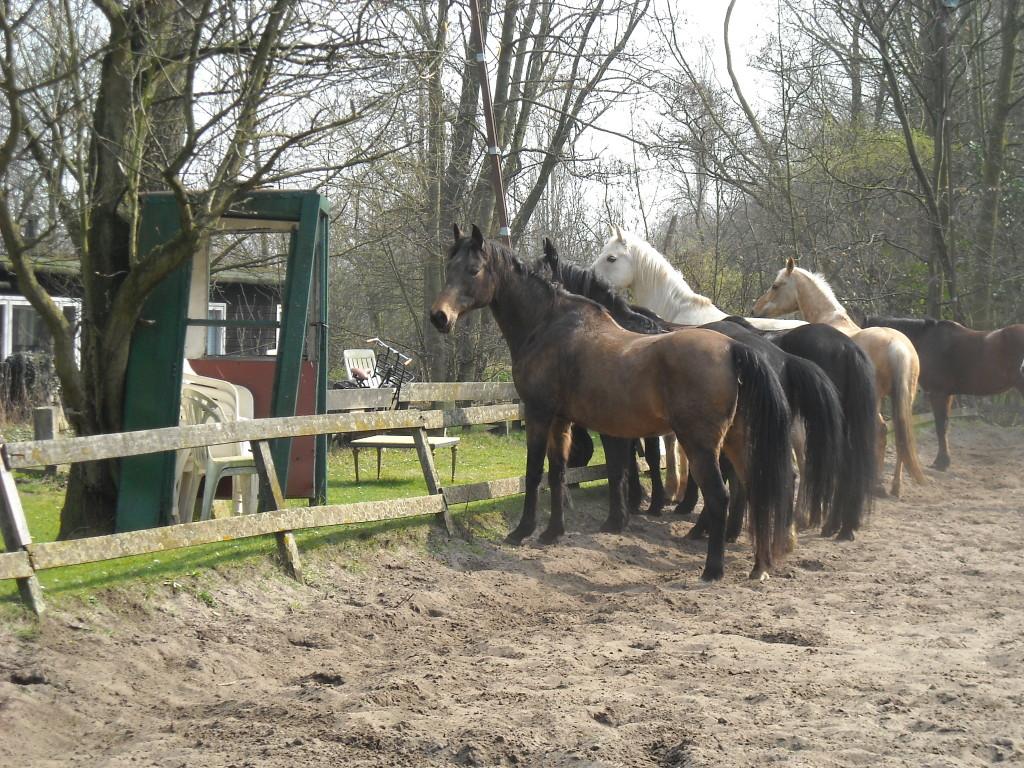 Paarden los