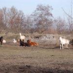 manege rusthof kudde